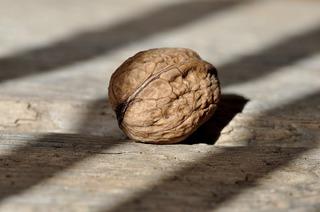 walnut-658569_1280.jpg